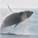 Bar Harbor Whale Watch Company - Offering several distinct whale watching, sightseeing, light house & nature trips which sail daily throughout the summer season. A must do when visiting Acadia National Park!