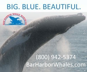 Bar Harbor Whale Watch Company - Whale Watching Tours.
