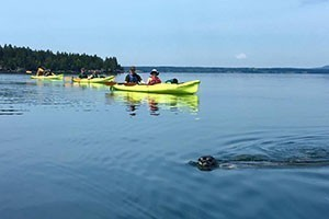 """National Park Sea Kayak Tours :: Ecological Sea Kayak Tours on the remote """"Westside"""" of Acadia. 1/2 Day (4 hr.) AM, PM & Sunset trips led Professional Maine Guides. Highest Rated Kayak Outfitter in Acadia!"""