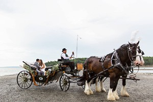 Wild Iris Farm Wedding Carriages :: Classic, elegant, memorable, magical – just a few of the words our brides have used to describe our beautiful horses and carriages. Every bride should feel like Cinderella!
