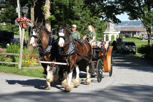 Wild Iris Farm Horse Drawn Carriage Tours :: See Bar Harbor the way it was designed to be seen – via a classic carriage drawn carriage drawn by noble Shire draft horses. Fully narrated 30-45 minute tours. Book online!