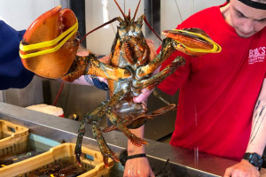 Local Tours Showcasing Maine Lobsters