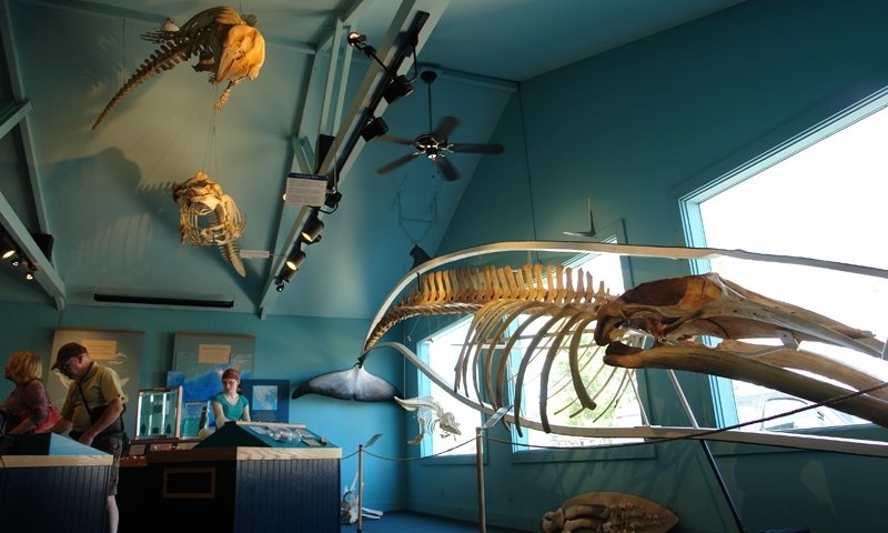 Bar Harbor Whale Museum Maine