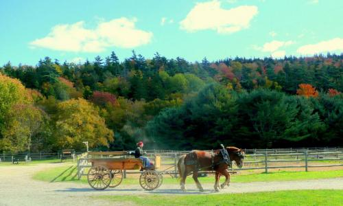 Wagon Ride Wildwood Stables Acadia