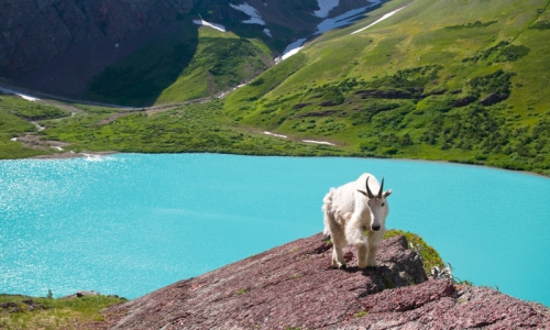 Top National Parks For Viewing Wildlife Alltrips