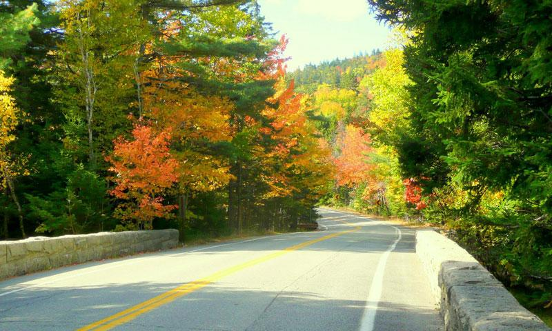 Park Look Road in Acadia National Park