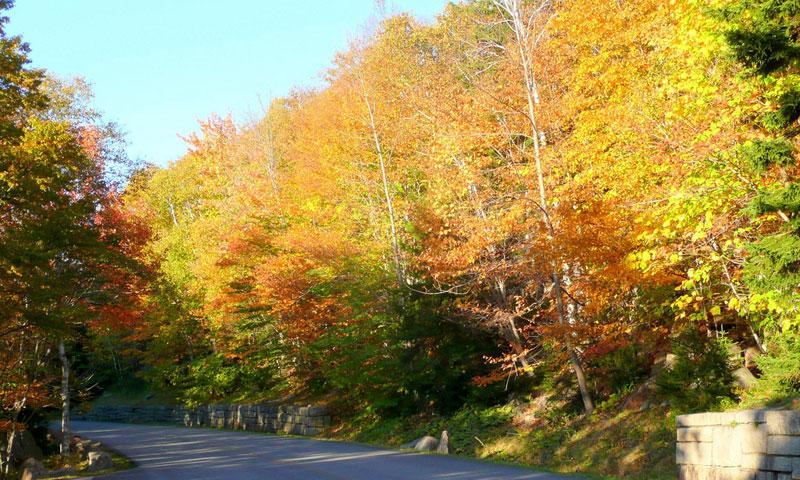Acadia National Park Road