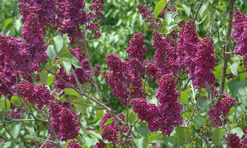 Acadia National Park Plants Alltrips