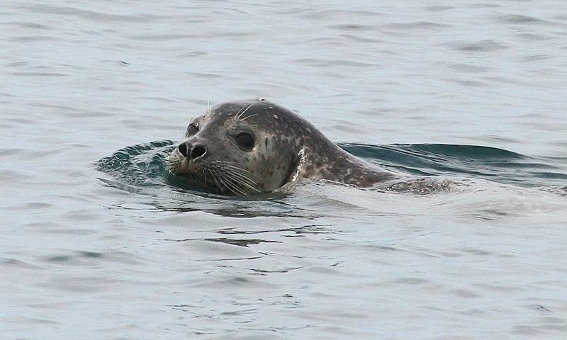 Acadia National Park Ocean Life Alltrips
