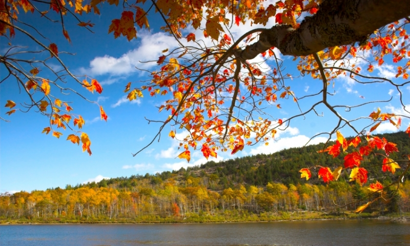 Acadia National Park Maine Fall Foliage