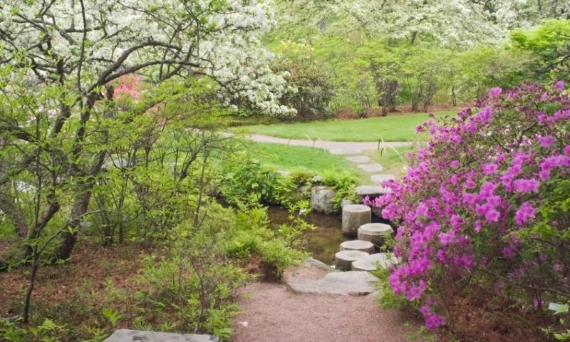 Maine Wildflowers Alltrips